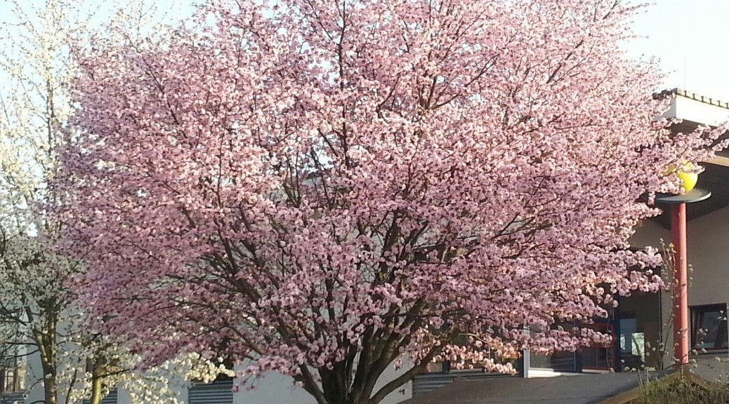 Frühling auf Überhaaren