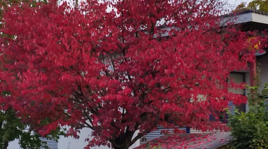Herbst2015_3